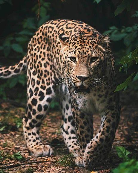 "Leopard ""Green"" microflannel blanket image 1"