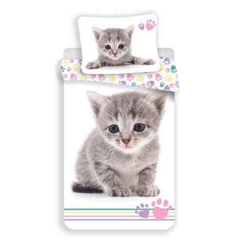 """Kitten """"Colour"""" obrázek 1"""