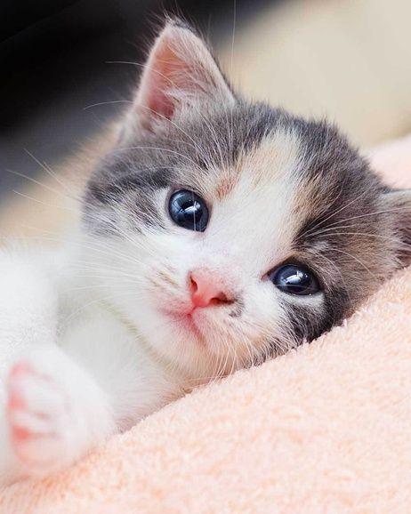 Koťátko mikroflanelová deka obrázek 1