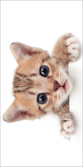 Kitten White beach towel image 1