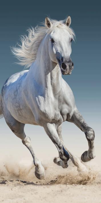 """Kůň """"03"""" osuška obrázek 1"""