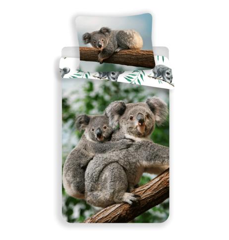 Koala obrázek 1