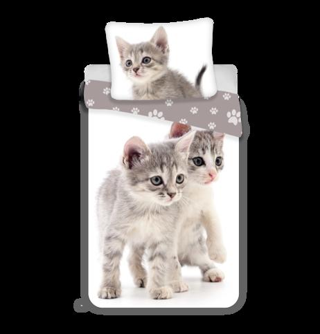 """Kitten """"Grey"""" image 1"""