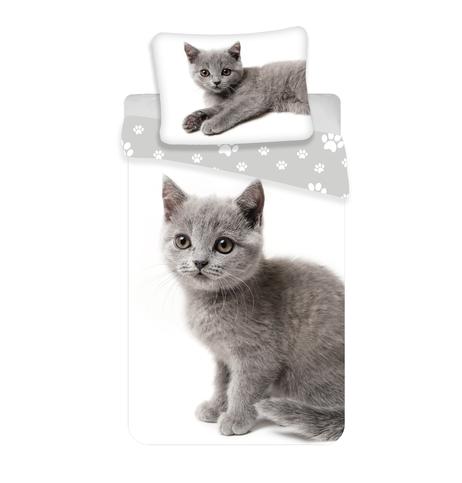 """Kitten """"Grey 02"""" obrázek 1"""