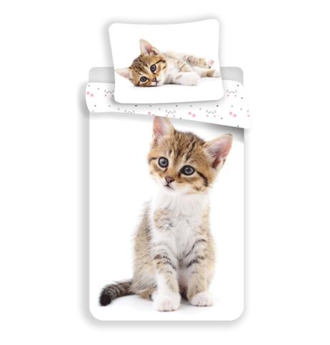"Kitten ""White"" image 1"