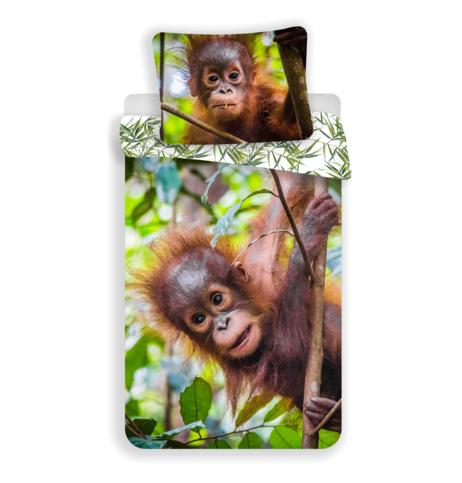 Orangutan 02 obrázek 1