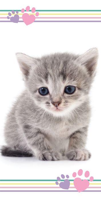 """Kitten """"Colour"""" osuška obrázek 1"""