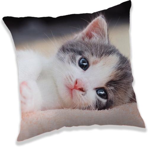 """Koťátko """"Kitten"""" polštářek"""