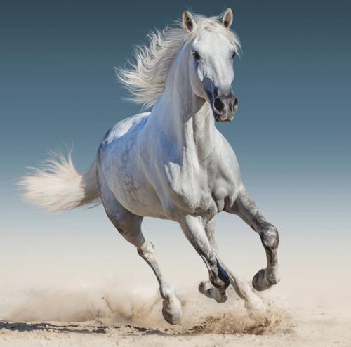 """Bílý kůň """"White horse"""" povlak na polštářek"""